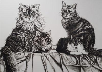 pet portraits by Sharron Tancred