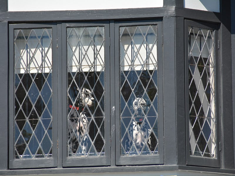 Two Dalmatians looking out of the window of their Tudor style home